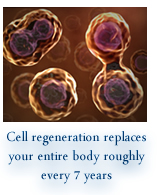 Every cell in your body gets replaced by a new one